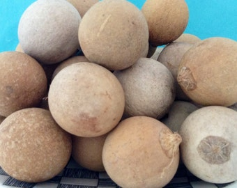 Sea Beans - Drift seeds - Kamani seeds - True Kamani - Alexandrian Laurel - Punnai Nut - Natural - Hawaiian seed lei supply - Hawaiian seeds