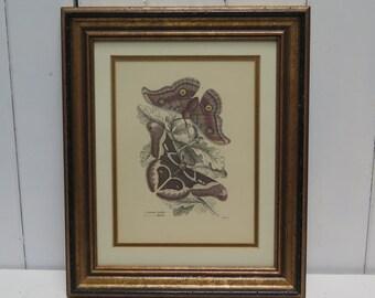 Seplia Brown Print Framed Butterfly Botanical  Print -