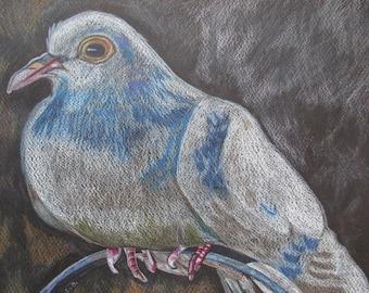 Peace Dove original drawing