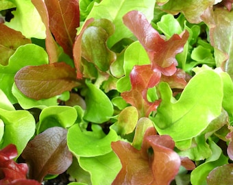 Mesclun Lettuce Seeds