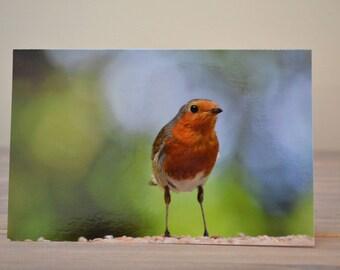 Cute Christmas Robin Blank Greetings Card 12 x 19 cm