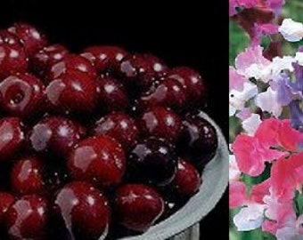 Spring Floral Melter Tart, 1 oz.