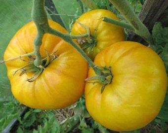Tomato Seeds Mikado yellow Ukraine Heirloom Vegetable Seeds #1337