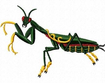 praying mantis 167