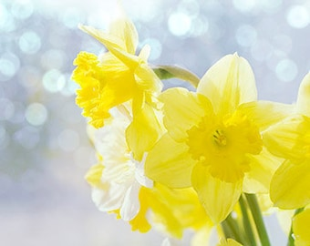 Daffodil Art, Still Life Photography, Floral Art Print, Yellow Wall Decor, Nursery Art