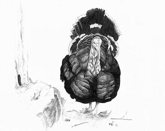 Turkey - 8x10in. Original Graphite Drawing