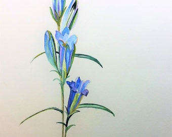 original painting 'gentiana' watercolor 30 x 21 cm
