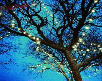 Night Lights Fine Art Photograph,bare branches, night sky, blue, Christmas lights, twinkle