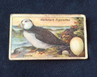 Gallaher Cigarettes Picture Card Birds Nests And Eggs Series No67 Puffin