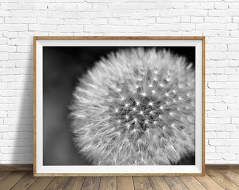 "nature photography, large art, printable art, instant download printable art, black and white, digital download, modern - ""Divine Design"""