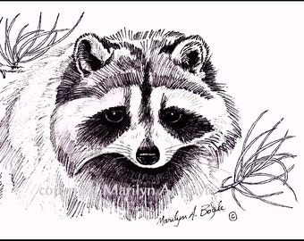 PRINT OF RACCOON - ink, wildlife, wilderness, drawing, Canada, art