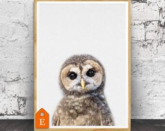 Imprimer Print hibou, animaux de la crèche, crèche Print, pépinière Art animalier, Animal, animaux muraux, chambre d'enfant murale Art, décor de chambre d'enfant, Animal