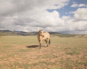 Buckskin Horse Photograph in Color | Western Landscape Art | PHYSICAL PRINT