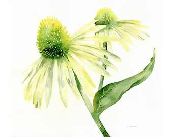 Three Cone Flowers Original Watercolor Painting 8 x 10 Landscape