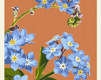 Forget-Me-Nots - Letterpress (Art Prints available in multiple sizes)