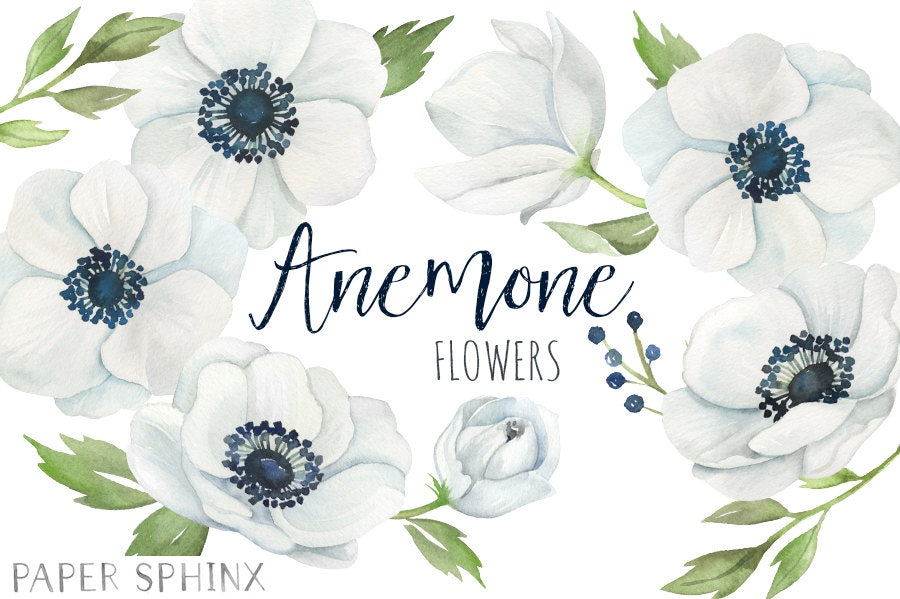aquarell anemone blumen clipart wei e hochzeitsblumen. Black Bedroom Furniture Sets. Home Design Ideas