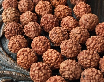 Rudraksha Seed Beads 9-10mm Continuous Strand 108 Beads