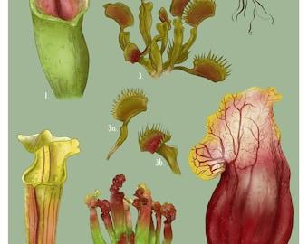 Carnivorous Plants chart poster