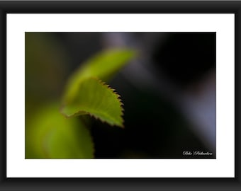 A Fine Art Print of a Close-up of Green Leaf, Macro Photography, Leaf, Photograph