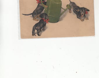 Dachshunds At Play With A Watering Can-Water Sprinkling One Of The Dogs-Antique Postcard-Dog Art