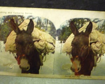 "Steroview card ""Jennie Our Pet Pack Mule"" from the Hunting Fishing and Camping Series"