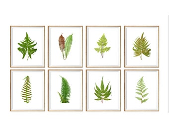 Botanical Art Print SET of 8, eight botanical prints, vintage botanical prints, antique botanical prints, modern botanical prints, large