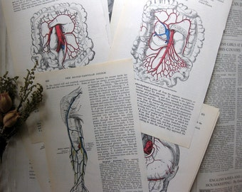 Vintage Gray's Anatomy Medical Illustrations Prints, Vascular System, Uterus, Bladder, 10+ Pages