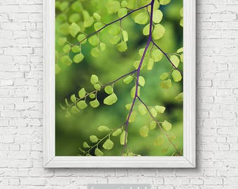 Leaf Photo Print - botanical, garden photography, botanical art print, gifts for her, gift for gardener, office decor, home wall art, green