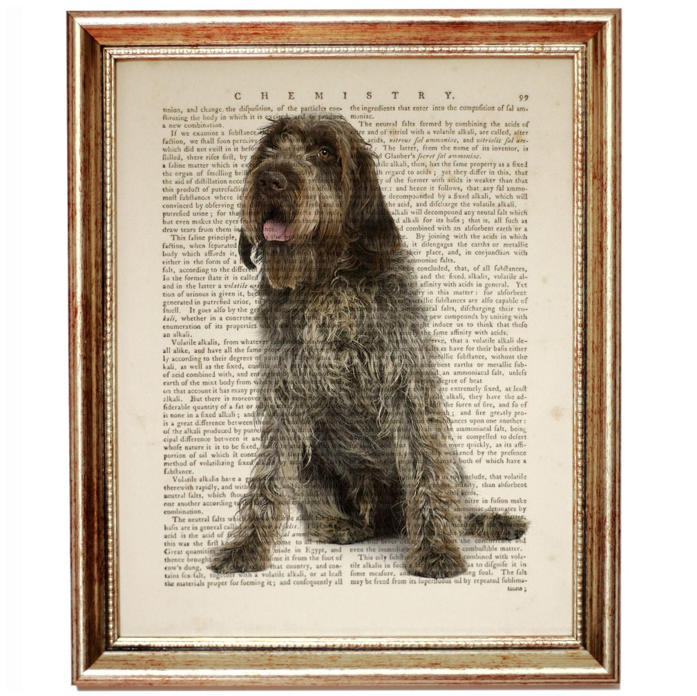 Wirehaired Pointing Griffon Painting, Wirehaired Pointing Griffon ...