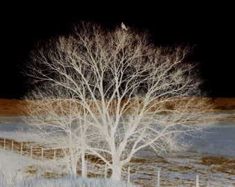 Ghost Hawk-surreal ethereal nature altered photograph eagle raptor tree