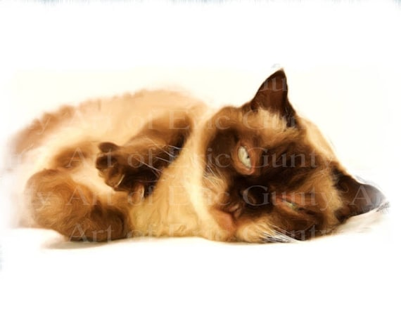 Sleeping Kitten Birthday - Edible Cake and Cupcake Topper For Birthday's and Parties! - D22951