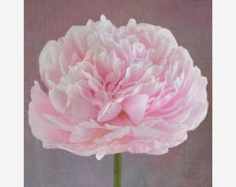 Peony Photo Art, Pink Peony, Nursery Decor, Bedroom Decor, Pink Floral Art, Home Decor, Wall Art, Soft, Romantic, Light Pink