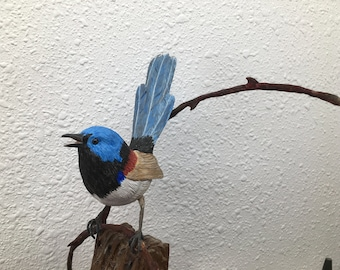 Verigated fairy wren