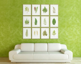 Fern Art Prints Large SET of 12. Fern Wall Art/ Fern Wall Decor/ Fern Home Decor/ Fern Art/ Fern Print/ Fern Pictures/ Gallery Wall