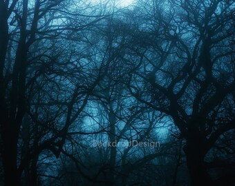 Halloween Backdrop - scary scene, dark forest, black trees, fall, winter - Printed Fabric Photography Background G0093