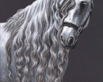 Andalusian Horse - Fine Art Print