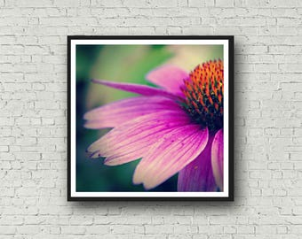 Flower Print - Echinacea Coneflower - DIGITAL DOWNLOAD - Pink Orange Flower Spring Home Decor - Flower Printable - Floral Stock Photography