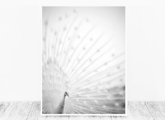 Black and White Peacock Wall Art