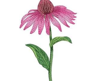 Embroidery design, дизайн вышивки, Echinacea, эхинацея, flower, цветок, plant, растение, Chamomile, ромашка, Embroidery on clothes, одежда