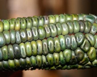 Oaxacan Green Corn