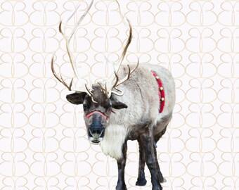 Smiling Reindeer Overlay + Bonus Christmas Tree Farm Background!