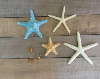 Starfish Assortment, 42 Pieces, Armoured Starfish, Finger Starfish, Bay Starfish
