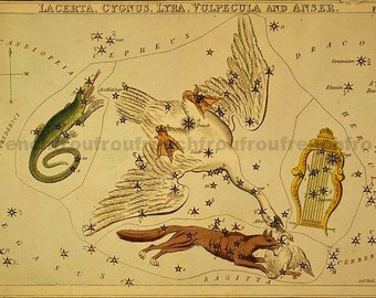antique astronomy illustrated lithograph lacerta constellation swan lyre