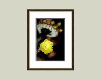 "Cactus Crown 12""x18"" Digital Download - Frame Not Included"