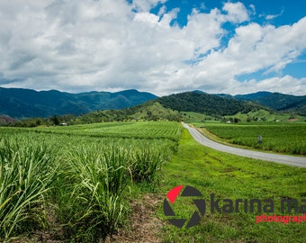 Long Winding Road, Australian Scenery Photograph, Sugar Cane Fields, Mackay, Pioneer Valley, Print, Wall Art, Home Decor