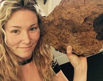 Wild Alaskan Chaga Medicinal Mushroom Whole Chunk 1-5 lbs