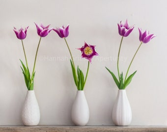 Here's Lookin' at You—Purple Tulips: Fine Art Photography