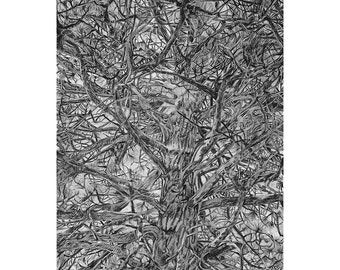 Pine Tree Print- 8 x10- Realistic Charcoal Drawing- Slate Grey, Black-  Tree Trunk and Branches