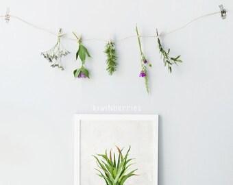 Cactus print - Boho cactus print - Cottage chic - Rustic cactus art - Printable art gift - Cacti print - Watercolor cactus - Digital prints