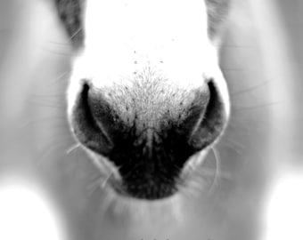 Donkey Nose Fine Art Photography Black and White quirky minimal home decor Burro nose funny farm animal Ranch house chic country home decor
